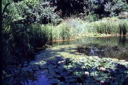 L 39 orto botanico di bologna for Stagno artificiale giardino