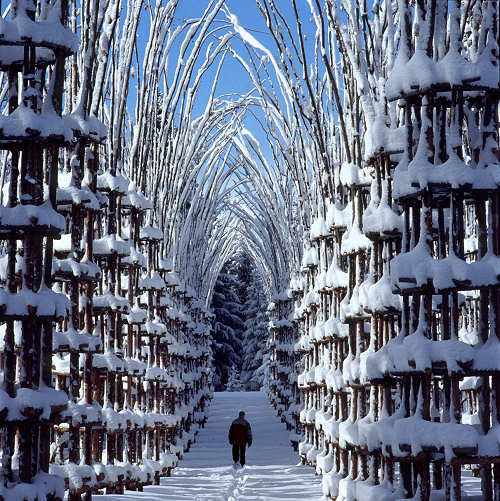 La cattedrale vegetale di giuliano mauri, 2001 - foto aldo fedele